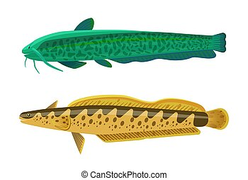 Rainbow Trout and Wels Catfish Vector Illustration