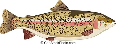 Rainbow trout carton - Rainbow trout vector cartoon...
