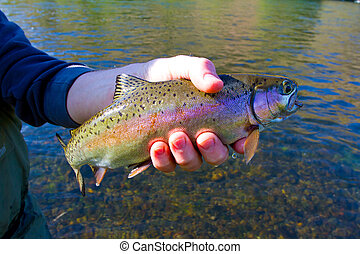 Rainbow Trout Catch Release - Catch and release fishing is a...