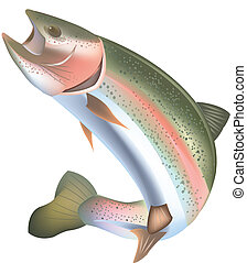 rainbow trout - freshwater fish predator trout