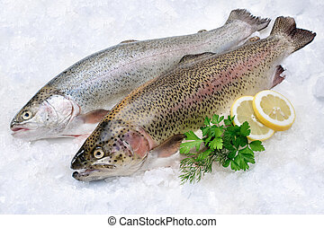 Rainbow trout on ice - Rainbow trout with fresh herbs on ice...