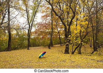 Rainbow umbrella in the autumn park