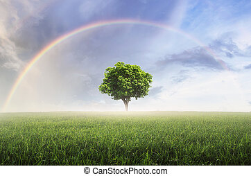 Rainbow with meadow.
