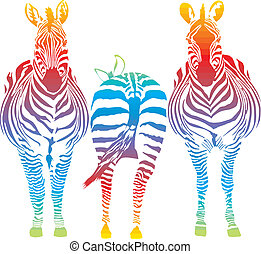 rainbow zebra - vector illustration of three rainbow in the...