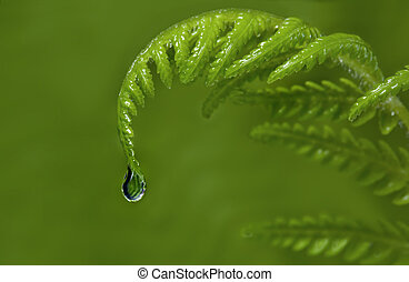 Raindrop falling from new tip of a fern frond. Blurred green background.