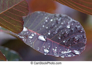 Raindrops and a red leaf