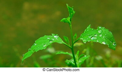 Raindrops. Close-up