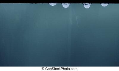 Raindrops Dripping Closeup - Macro shot of water droplets...