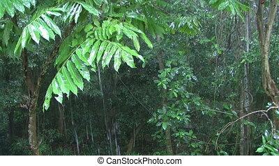 Raindrops falling on leaves. - Raindrops falling on green...