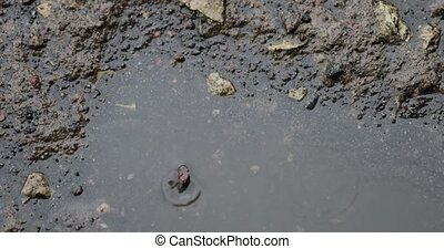 raindrops in a puddle