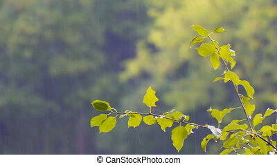 Raindrops on a branch with leaves