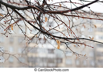 Raindrops on branches with yellow leaves closeup
