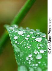 Raindrops on grass - Big water drops on a green grass blade...