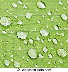 raindrops on green blade of iris close up