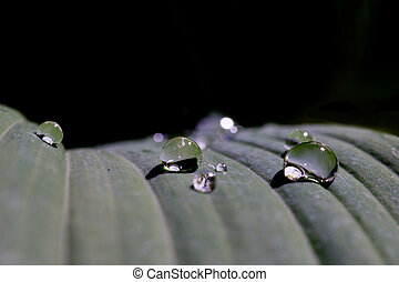 Raindrops on leaf