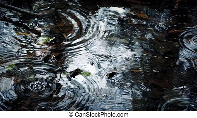 Raindrops On Pool In The Forest Closeup