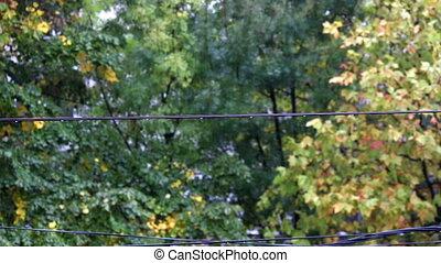raindrops on telephone cable autumn season