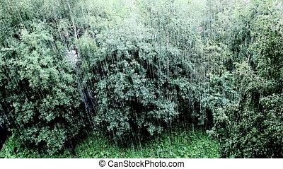 Rainfall - tropical rain, top view