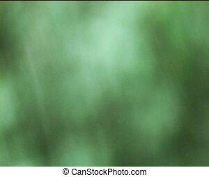 rainfall - some rain drops