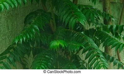 Rainfall - Green tree in rainfall