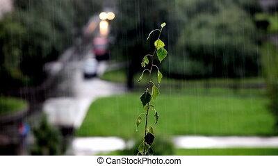 rainfall - Rain in the city