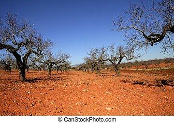 Peach tree field in red soil