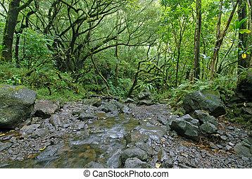 rainforest, ハワイ \, ハイキング