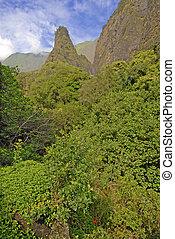 rainforest, 中に, maui, ハワイ