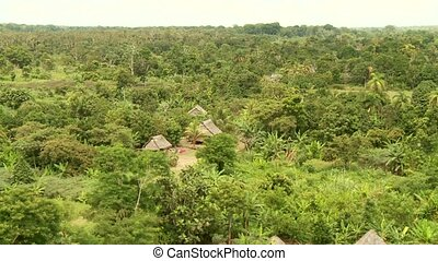 Rainforest and Amazon from above