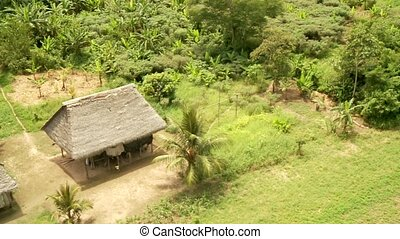 Rainforest and Huts