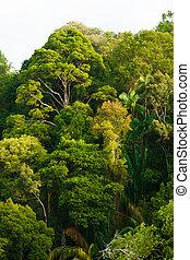 rainforest, baldachin