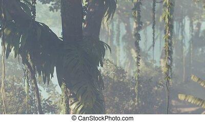 rainforest, brouillard, brumeux, jungle