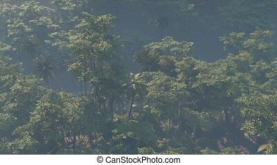 rainforest, brouillard, jungle, couvert, paysage