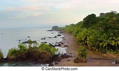 rainforest, côte, pacifique