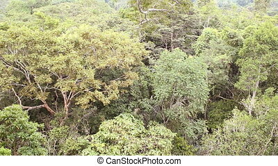 Rainforest canopy - Shot from a canopy platform in the crown...