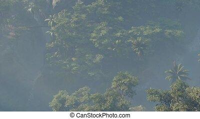 rainforest, couvert, brouillard, jungle, paysage