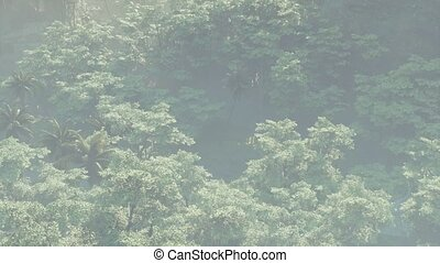 rainforest, couvert, paysage, jungle, brouillard