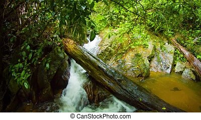 Deadfall log from the trees in this tropical rainforest wilderness, spans a small, natural waterfall, with sound. Video 4k