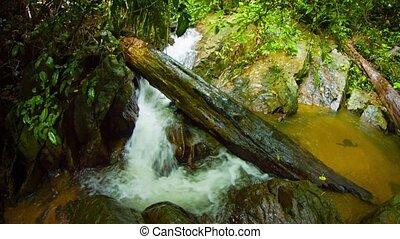 """Rainforest Deadfall Log Spans a Natural Waterfall, with Sound"""