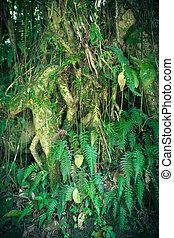 rainforest, details