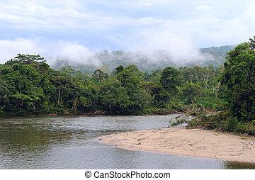rainforest, exotique, vue, équateur, amazone