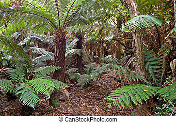 rainforest, farne