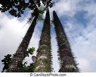 rainforest, handflächen