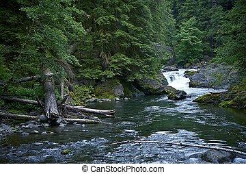 Rainforest Hoh River