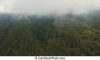 Rainforest in cloud, Bali,Indonesia. - Cloud over green...
