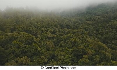 Rainforest in cloud, Bali,Indonesia. - Mountain forest in...