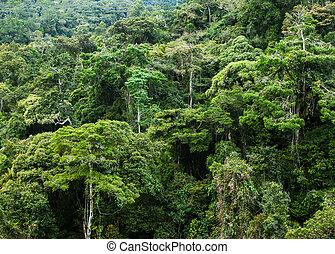 rainforest in Malaysia