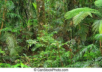 rainforest in North Queensland, Australia