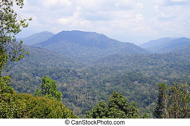 Rainforest in Taman Negara National Park