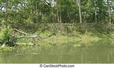 Rainforest in the national park Chitwan, Nepal.